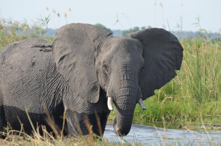 Pic3_elephantKwando