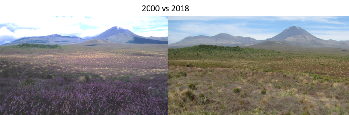 Ngaruahoe & Tongariro 2000vs2018 landscape