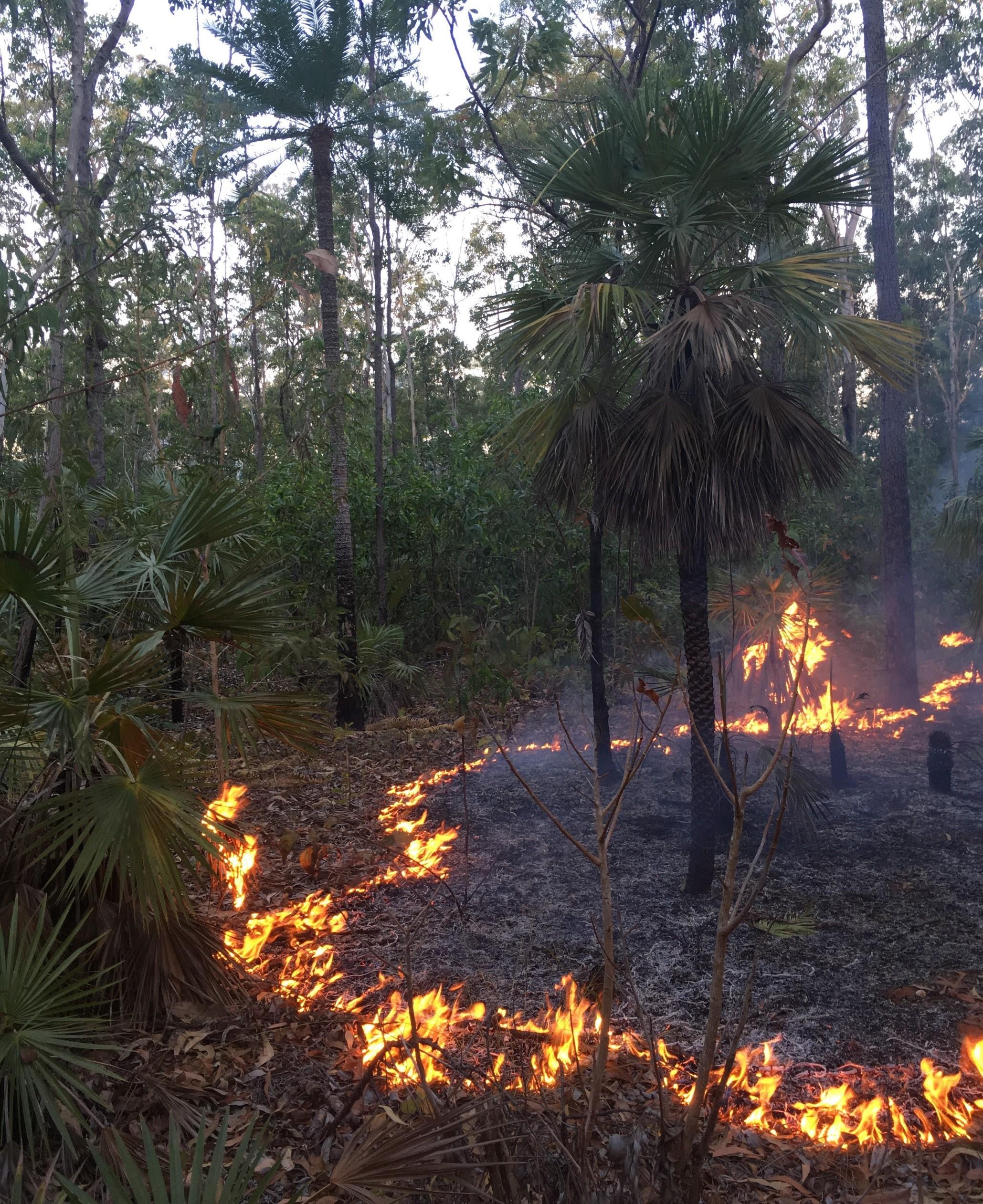 a low intensity early dry season savanna fire